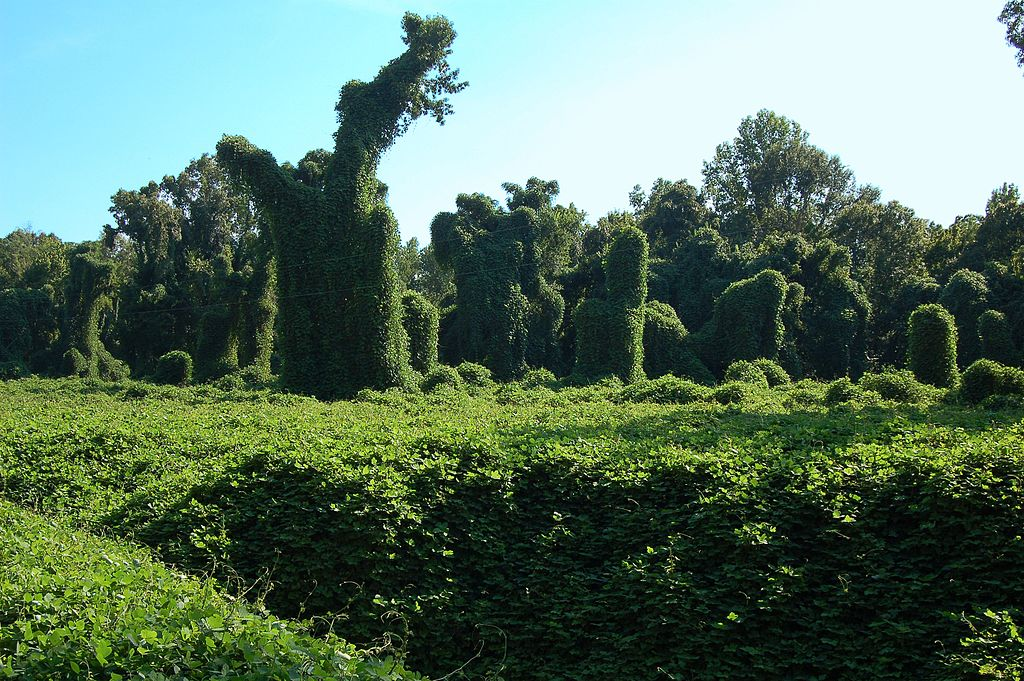 Ghost Plant, Kudzu, and Dodder, OH MY! 3 REAL Plants that Rival Halloween MONSTERS