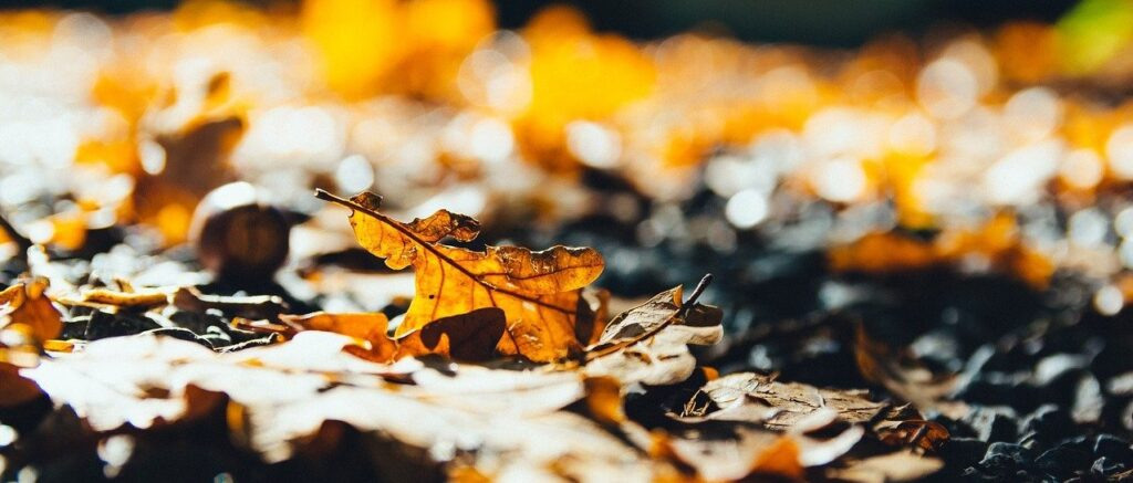 Engulfed in Leaves? 3 Options for Dealing with your Trees' Autumn Offerings!