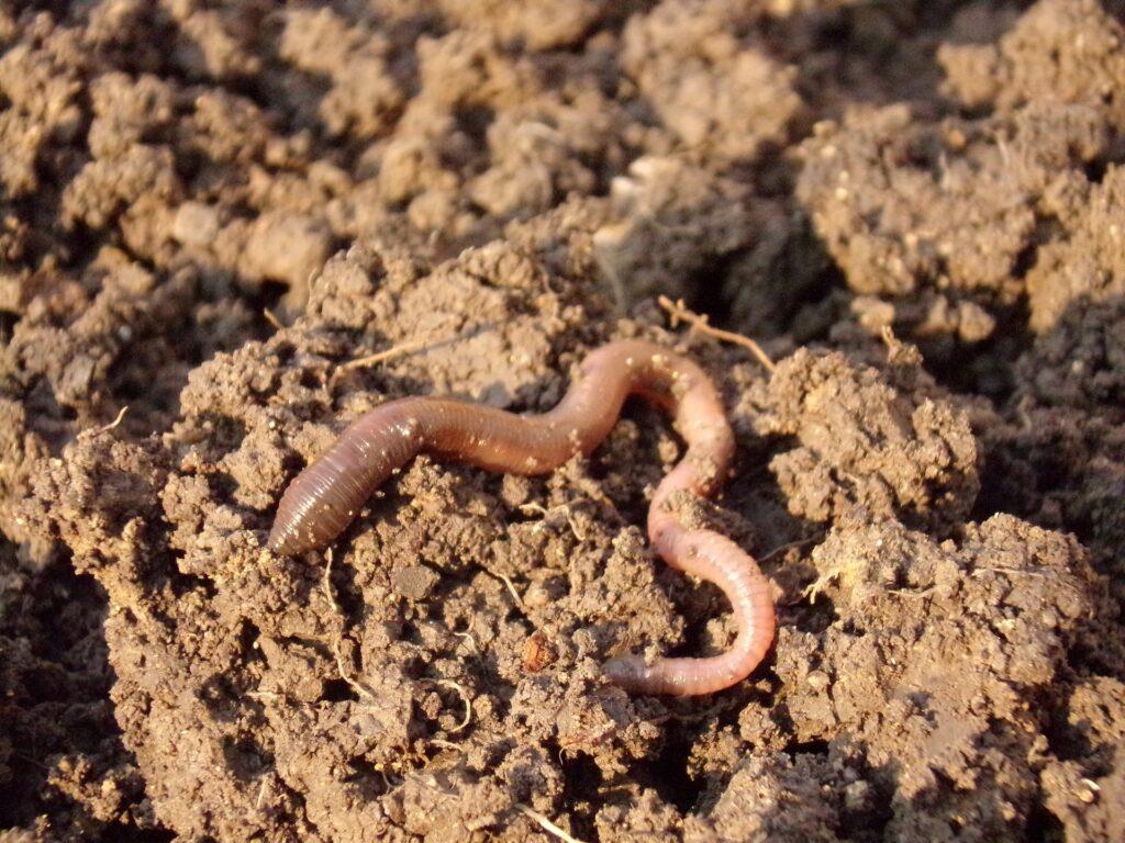 Exploring an Amazing Underground World: Soil Function & Biology